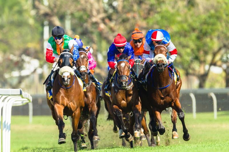 競走馬 レース